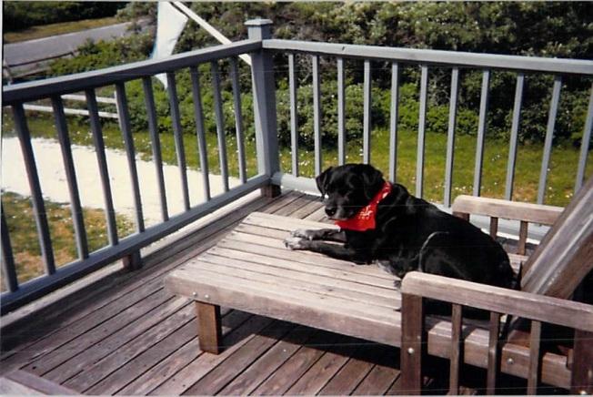 deck-dog